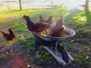 Lucy, Eileen, Brigid and Katie