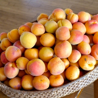 First fruit of the season - tangy apricots!