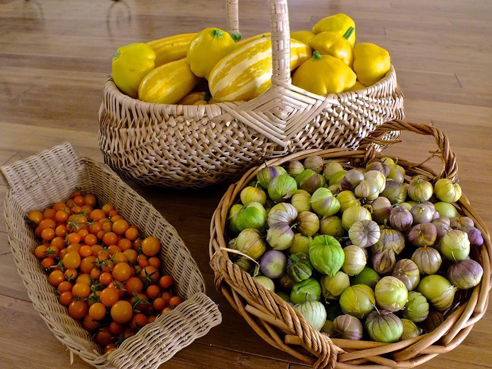 tomatillos-squash
