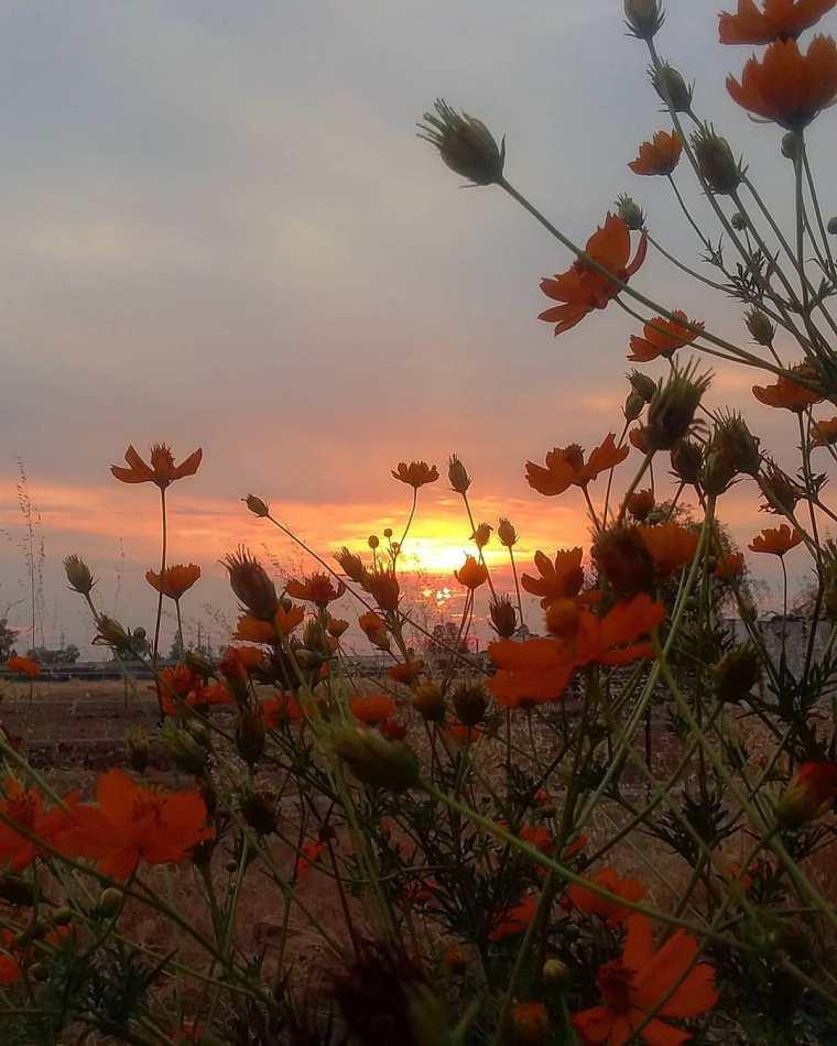 cosmos sunset