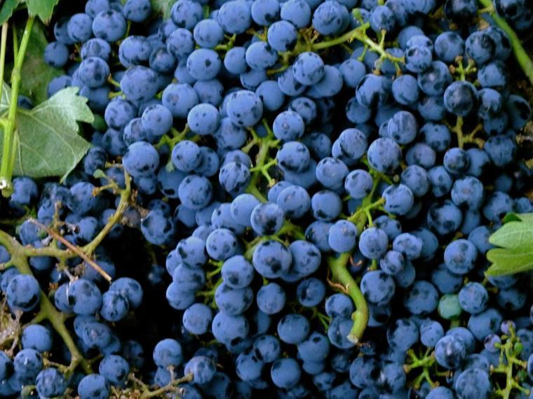 grapes 2020