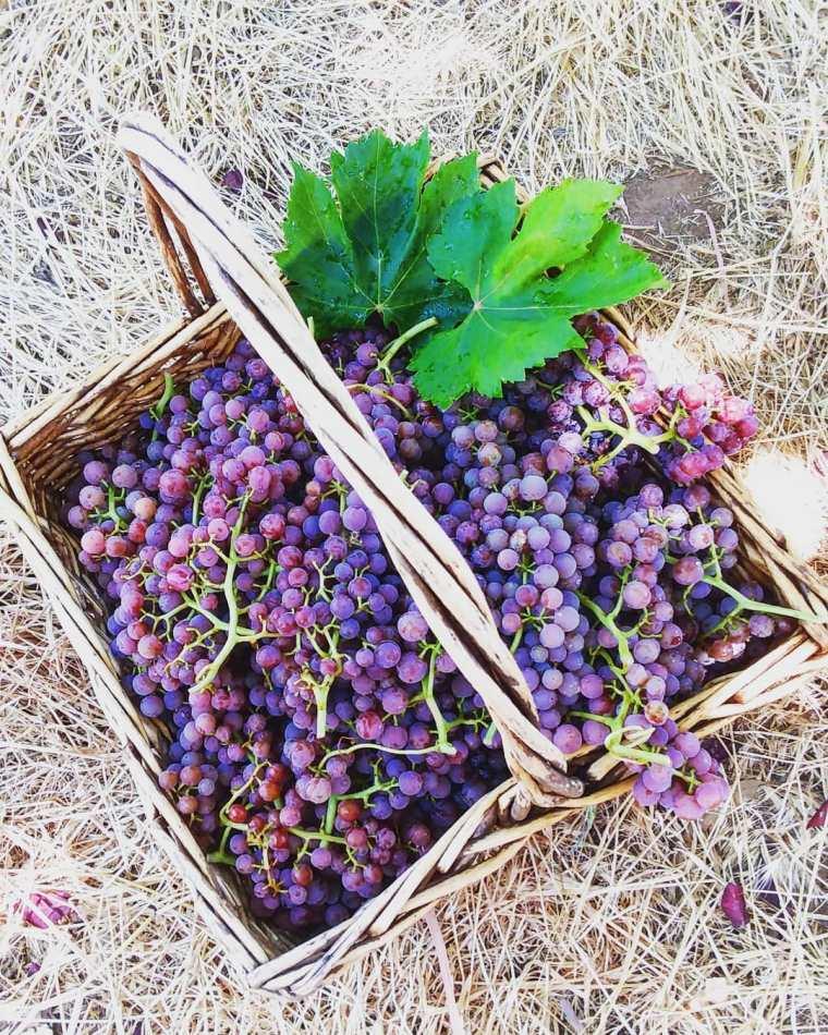 grapes- 2020